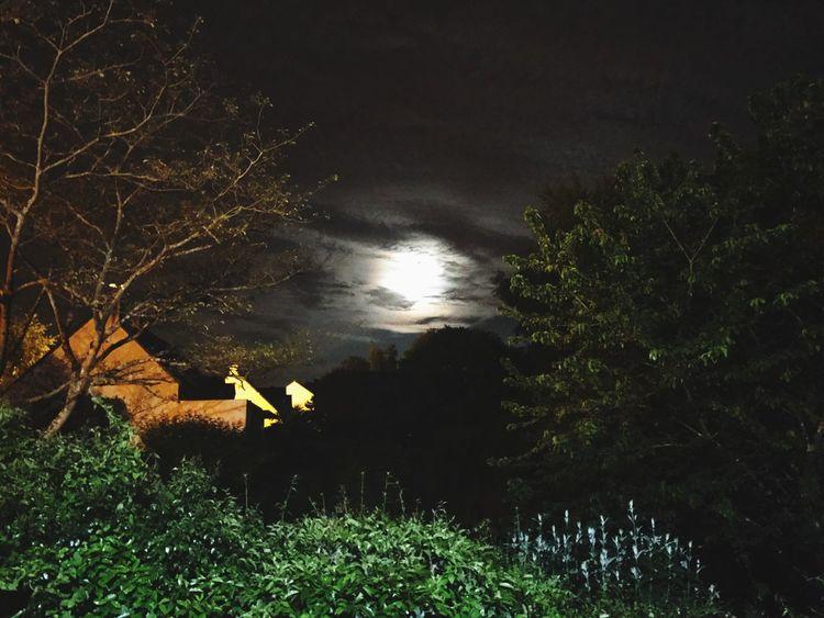 Moon Full Moon Night Tree Nature