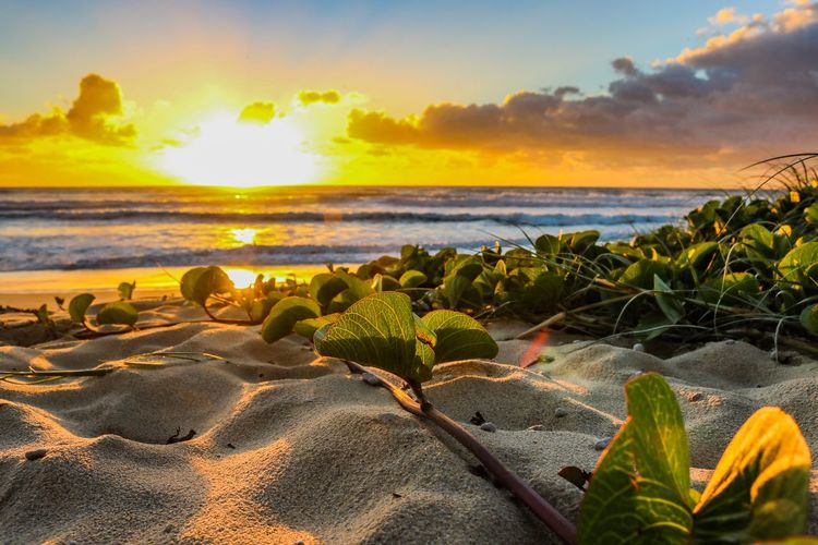 Holiday mode Sea Beach Sky Water Land Horizon Over Water Beauty In Nature Horizon Scenics - Nature Tranquility Nature Plant Tranquil Scene Sunset Cloud - Sky Sunlight No People Sand Idyllic Outdoors