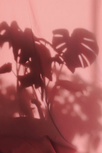 Close-up of silhouette flowering plant