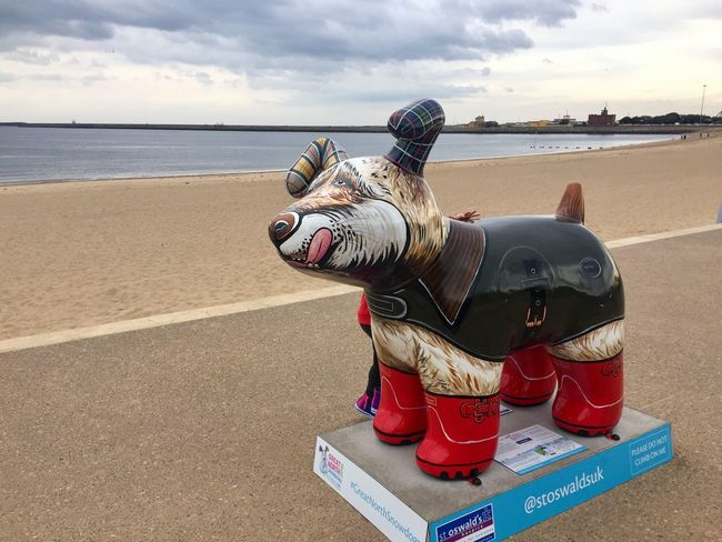 Water Sea Beach Sky Shore Casual Clothing Vacations Domestic Animals Cloud - Sky Person Ocean Barbour Snowdog