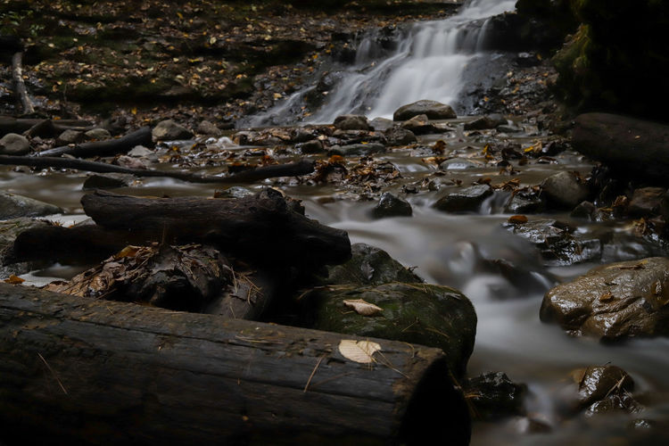Close-up of water flowing through rocks in forest