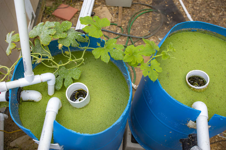 High angle view of algae in blue barrels with pipes at back yard
