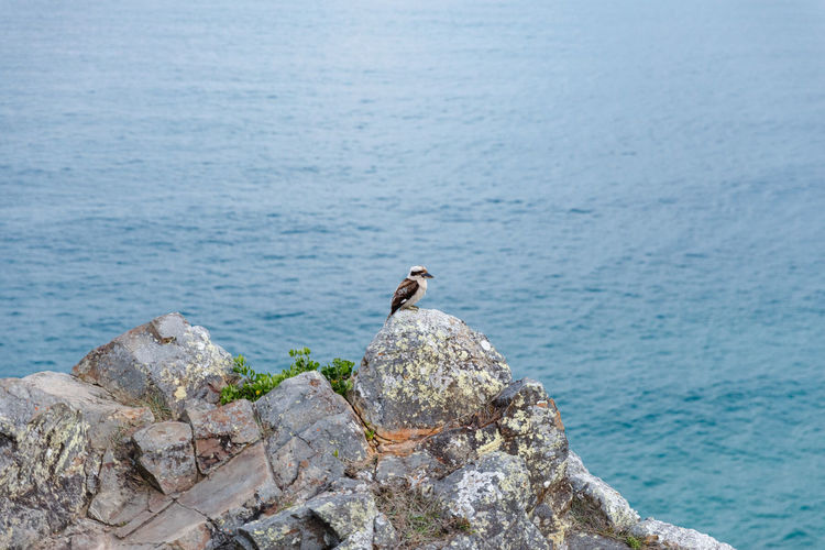 Byron Bay, Australia Animal Themes Animal Animal Wildlife Animals In The Wild Vertebrate Bird One Animal Sea Rock Perching Rock - Object Water Solid No People Nature Day Focus On Foreground Beauty In Nature Outdoors Travel Destinations Travel Summer Byron Bay Australia Kookaburra