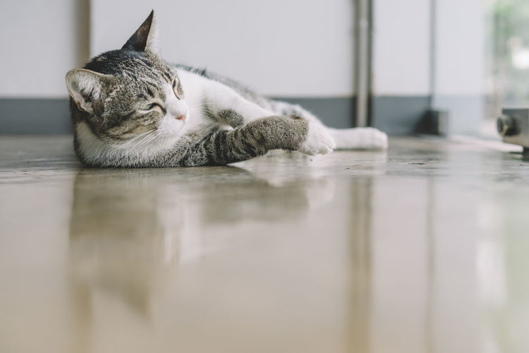 Animal Themes Cat Close-up Day Domestic Animals Domestic Cat Eyes Closed  Feline Indoors  Lying Down Mammal No People One Animal Pets Relaxation Selective Focus Sleeping