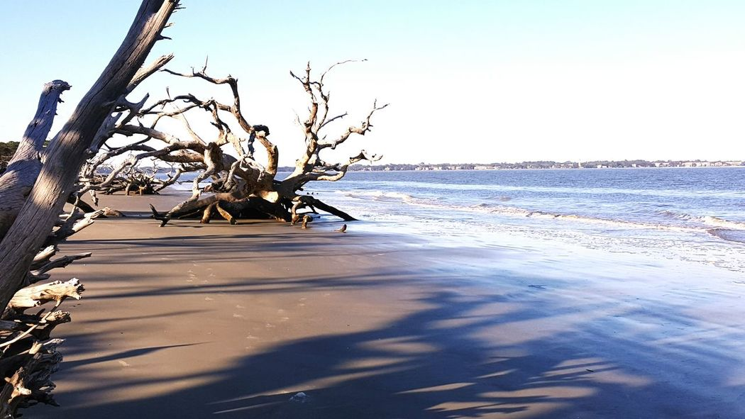 Barrier Island Intercoastal Waterway Driftwood Beach South Georgia Perspective Jekyll Island My Backyard