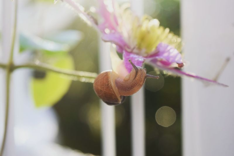 Snail🐌 Nature Flower Schnecke Petal Beauty In Nature Outdoors Tranquility Nikon Photography Beauty In Nature Plant Nature Blossom In Bloom Pink Color Botany Green Color No People