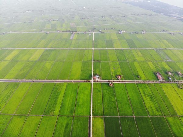 Aerial view of green paddy field Sunset Sunlight Beauty Outdoor Travel Nature Aerial Shot Aerial Photography EyeEm Nature Lover EyeEm Selects Getty Images EyeEm Best Shots Beauty In Nature Travel Destinations Beautiful Rural Scene Agriculture Tree Field Aerial View Grass Landscape Green Color Cultivated Land Agricultural Field Plantation Rice - Cereal Plant Terraced Field Rice Paddy Farm