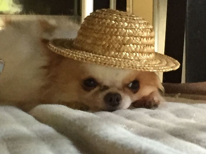 だいすけの帽子