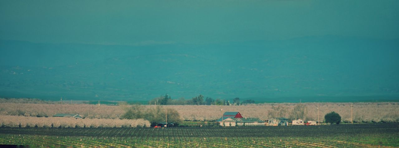 Panorama California Agriculture Almond Orchard In Bloom Blossoms For The Love Of Trees ~ Landscape Pastel Power Countryside GlamourCopy Space Spring Into Spring Rurex There Is No Planet B Countryside Glamour Red Barn Rural America Pastel Power Almond Orchard via Fotofall
