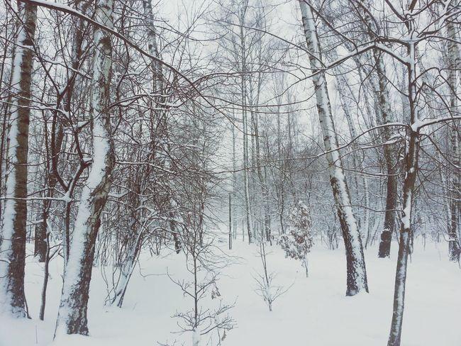 Зимнее фото Walking Around First Eyeem Photo