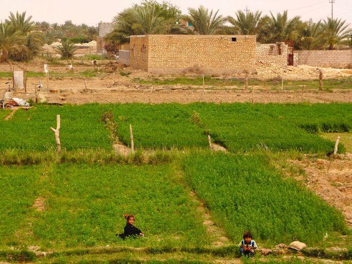 Iraq Ramadi Middle East Army Military Politics Children Farm War 2009-2010