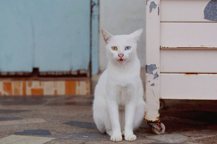 เจ้าหญิง Cat Animals Slowlife Urban Lifestyle Catlovers แมวไทย