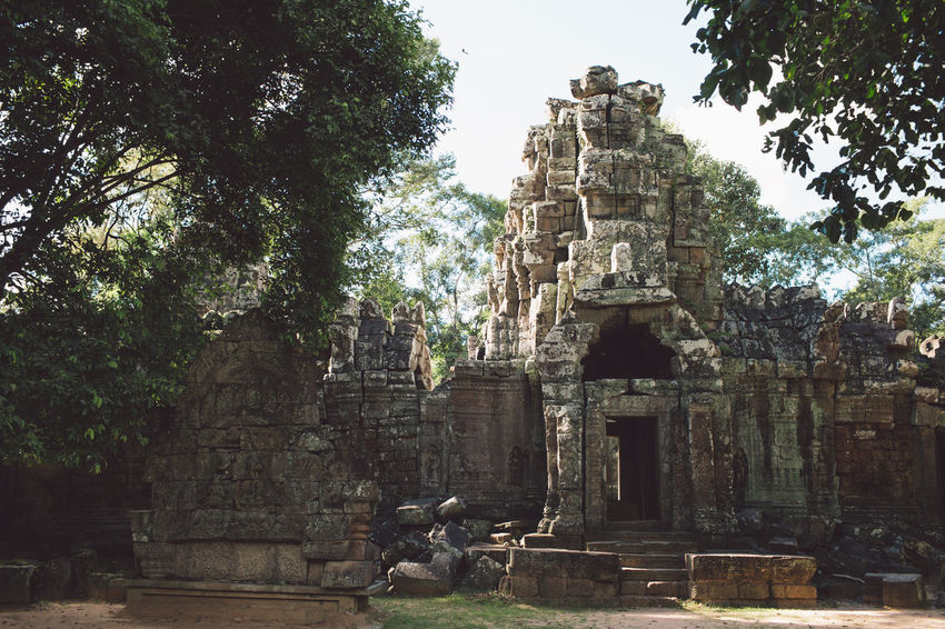 Siem Reap Cambodia Angkor Tree Religion Architecture Belief Place Of Worship Plant Ancient History Built Structure The Past Spirituality Representation Art And Craft Animal Mammal Tourism Day Sculpture Animal Themes Ancient Civilization No People Outdoors