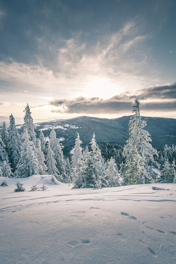 Beauty In Nature Cloud - Sky Cold Temperature Coniferous Tree Covering Environment Land Landscape Mountain Nature No People Non-urban Scene Pine Tree Plant Scenics - Nature Sky Snow Snowcapped Mountain Tranquil Scene Tranquility Tree Winter