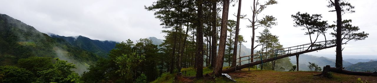 Tree Pinaceae Nature Forest Landscape Pine Woodland Sky Beauty In Nature Mountain Growth Outdoors Social Issues No People Day Tree Area Lush - Description bucarileonphilippines, bucarileonph