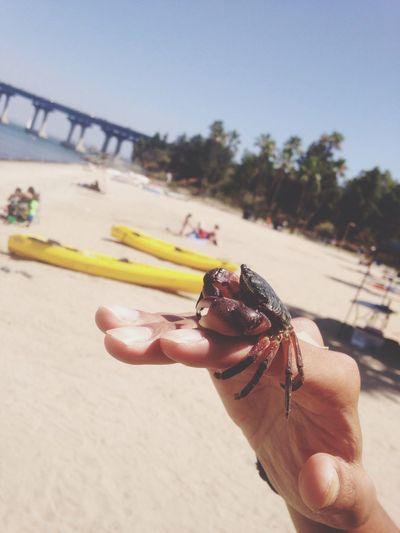 Crab's world. Beach Summer EyeEm Nature Lover Love