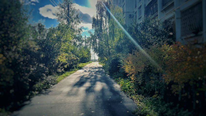 осень бывает и такой Mobilephotography Samsung Galaxy S7 #ЭGOИST EyeEm Selects Tree City Sunlight Sky Architecture Empty Road Country Road Asphalt