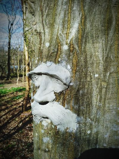 Green man Green Man Tree Face Sculpture Clay Woods Tree Tree Close-up Sky