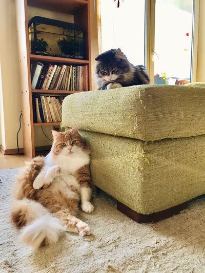 Cat sitting in a home