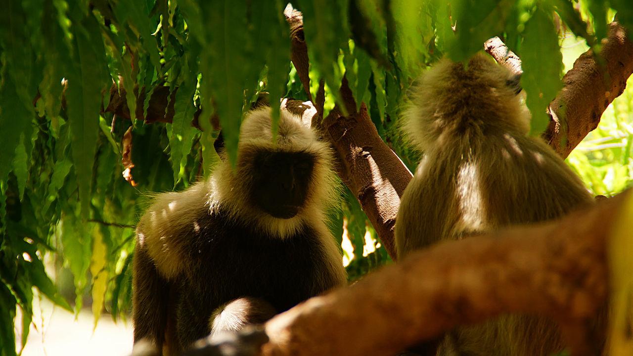 Monkeys Sitting On Tree