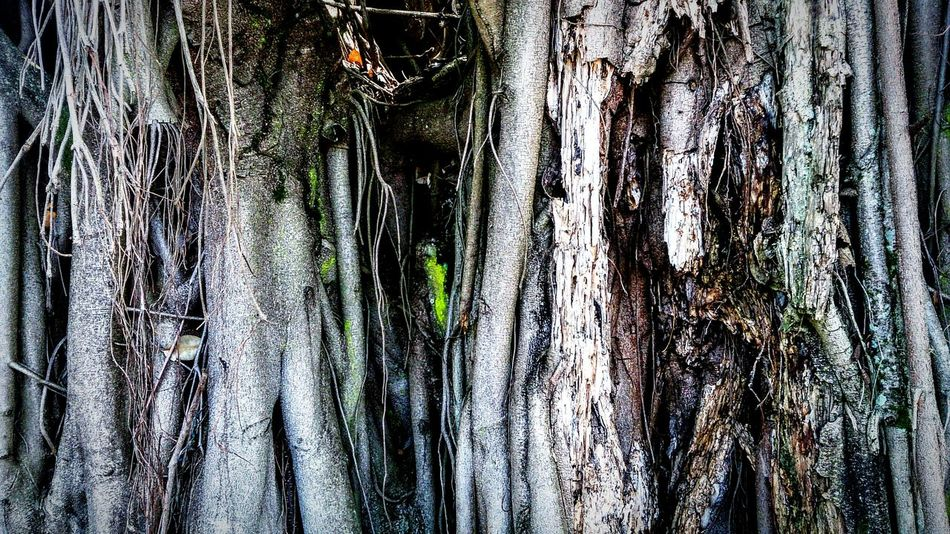 Tree Trunk Nature's Art - Tree Trunk Trunk Detail Tree Trunks Taking Photos Check This Out Beautiful Nature Xperiaphotography Sony Xperia Photography. EyeEm Nature Lover Hugging A Tree Different View Something Different