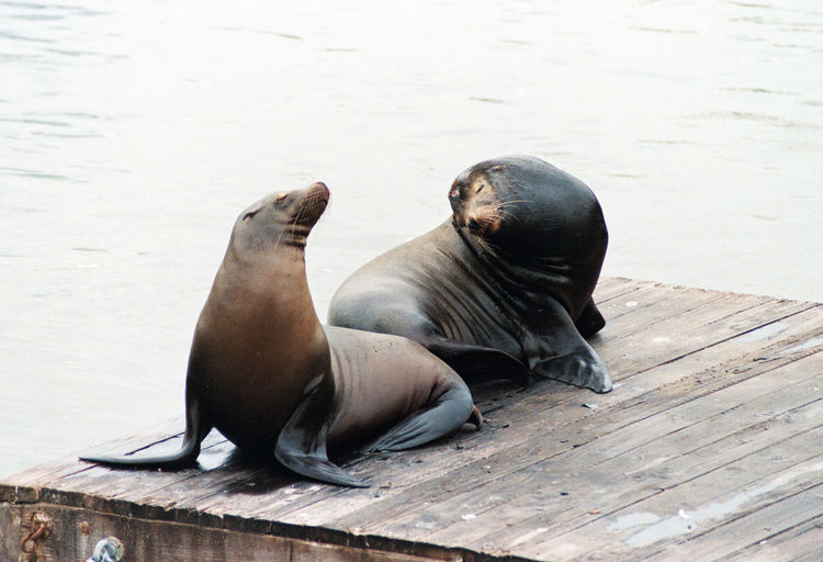 High angle view of seals on jetty