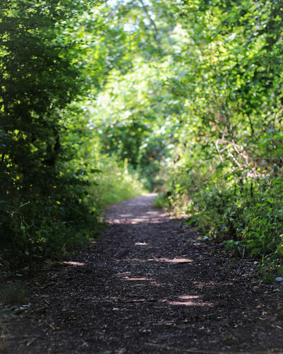 I don't know why i love pictures of trails, maybe it's the fact that they always have a direction. Tree Forest Footpath