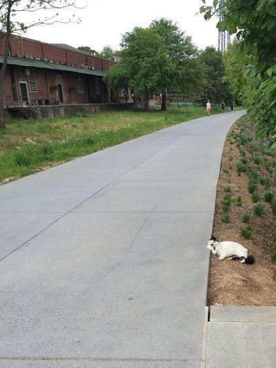 Catcalling on the Atlanta Beltline. Cat Atlanta Atlanta Beltline Old Fourth Ward