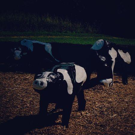 Vacas de verdad para @georgerm73 Miltonkeynes Concretecows