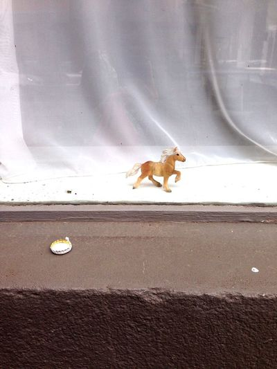 A dead wasp, a plastic horse and a used crown cap meet... Tales From Neukölln