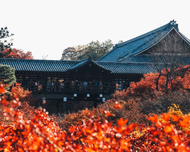 Temple in Autumn Architecture Built Structure Building Exterior Building Plant Tree Sky Autumn Change Nature House Roof Orange Color No People Place Of Worship Belief Religion Day Spirituality Clear Sky Outdoors