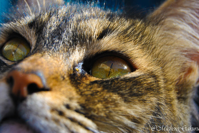 ~The eyes are the mirrors of the soul~ #CatEyes