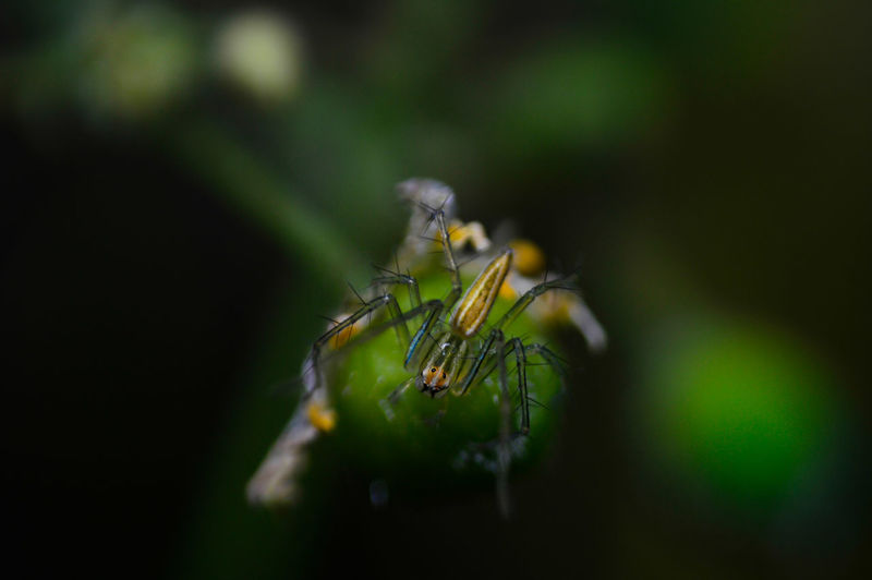 Spider Macro Macro Photography Animals In The Wild Macro_collection Selective Focus Macro Insects Beauty In Nature Spider And Flower Insect Animal Themes