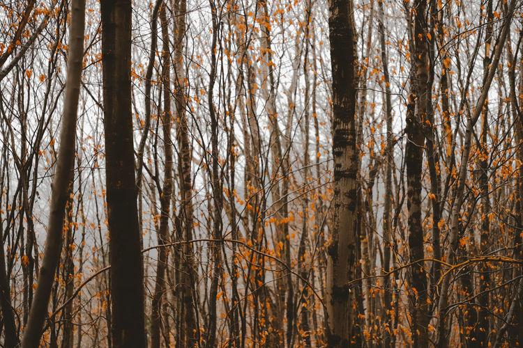 Bare Tree Day