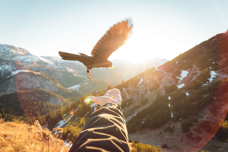 Cropped image of man feeding bird against mountain during sunny day