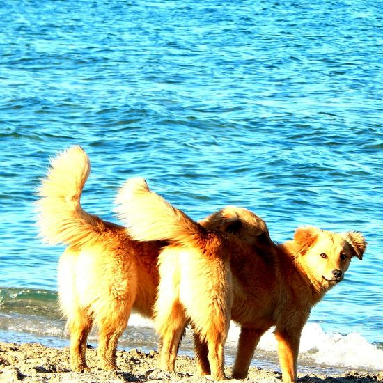 Hello World Taking Photos Beach Life Dogslife Dogs Playing  Animal_collection Beach Seaside Hanging Out Animallovers Mamaia Beach