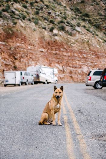Alertness Animal Arizona Beg Begging Brown Calm Calmness Curiosity Dog Domestic Animals Full Length Hungry Mammal One Animal Portrait Sitting Stare Staredown Staring The Grand Canyon Trust