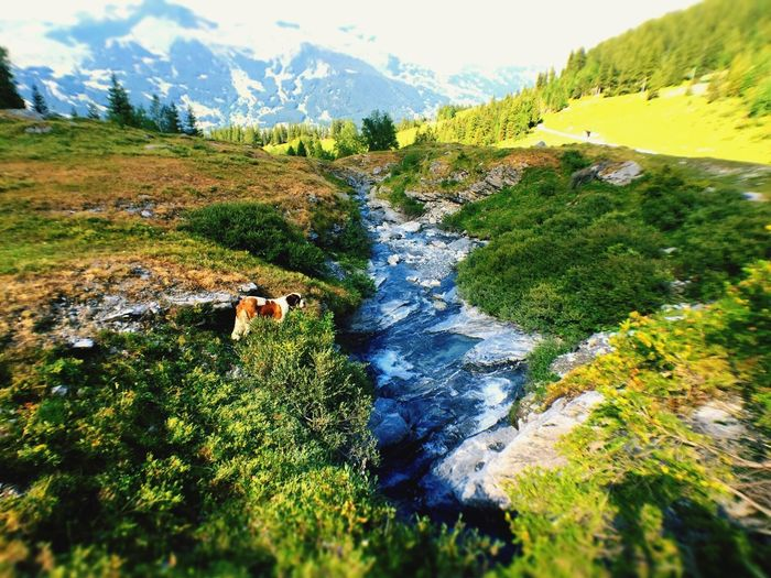 Mountain Scenics Nature Adventure Landscape Dog Outdoors Day Beauty In Nature Water Adults Only One Man Only Pets Adult Only Men Men People One Person Full Length Domestic Animals A Dog Of Flanders Jungfrau Grindelwald First Eyeem Photo