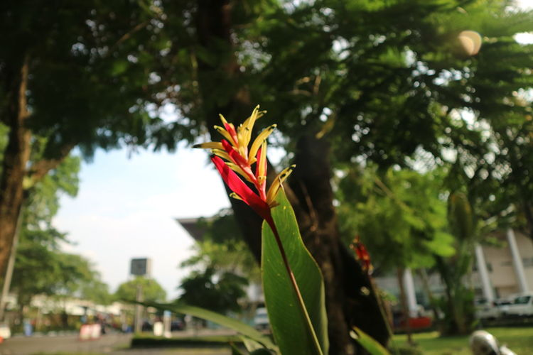 Close-up of flower against trees