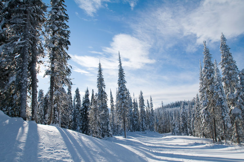 Sun Peaks Ski Resort, Kamloops, BC, Canada Beauty In Nature Cloud - Sky Cold Temperature Day Forest Landscape Nature No People Outdoors Pine Tree Pine Woodland Scenics Sky Snow Tranquil Scene Tranquility Tree Winter