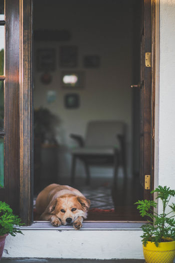 Animal Themes Architecture Close-up Day Dog Domestic Animals Door Doorway Indoors  Looking At Camera Mammal No People One Animal Open Door Pets Portrait Relaxation