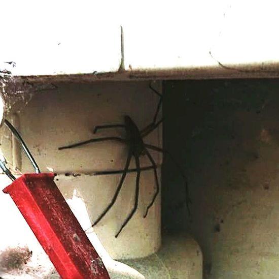 😮 Spider Nature Incrible Fear Frightened  Giant Giantspider OlocoBicho Coisadanatureza Bu