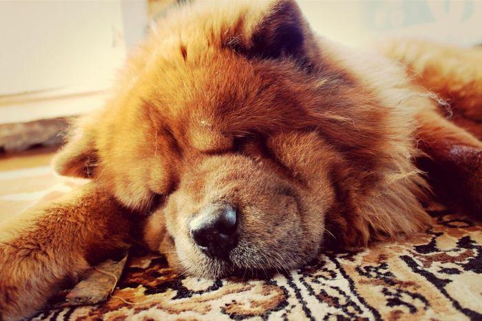 My tired Dog , Animals