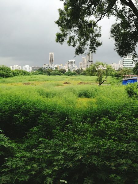 Beauty In Nature Green Color Grey Sky Opposite View Viewpoint Modern City Huawei Mate 8
