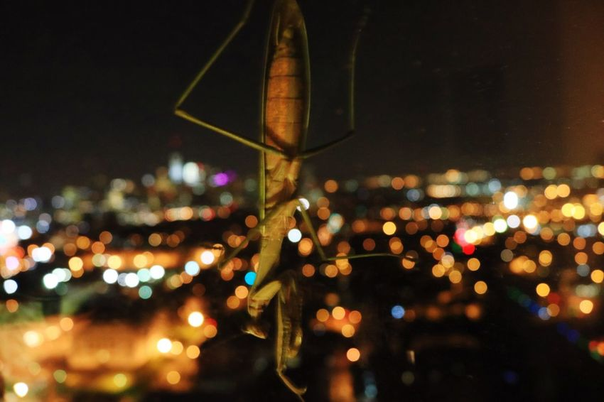 Illuminated Night City No People Architecture Building Exterior Outdoors Cityscape Close-up Sky Insect 34th Floor Urban Skyline Nature Vs City Cityscape Out Of Focus Giant Insect New York City Modern