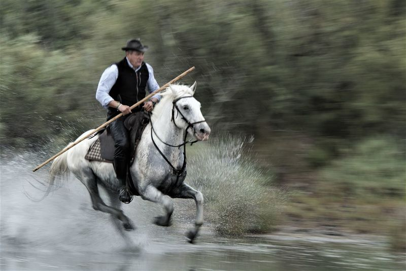 Man riding horse in river