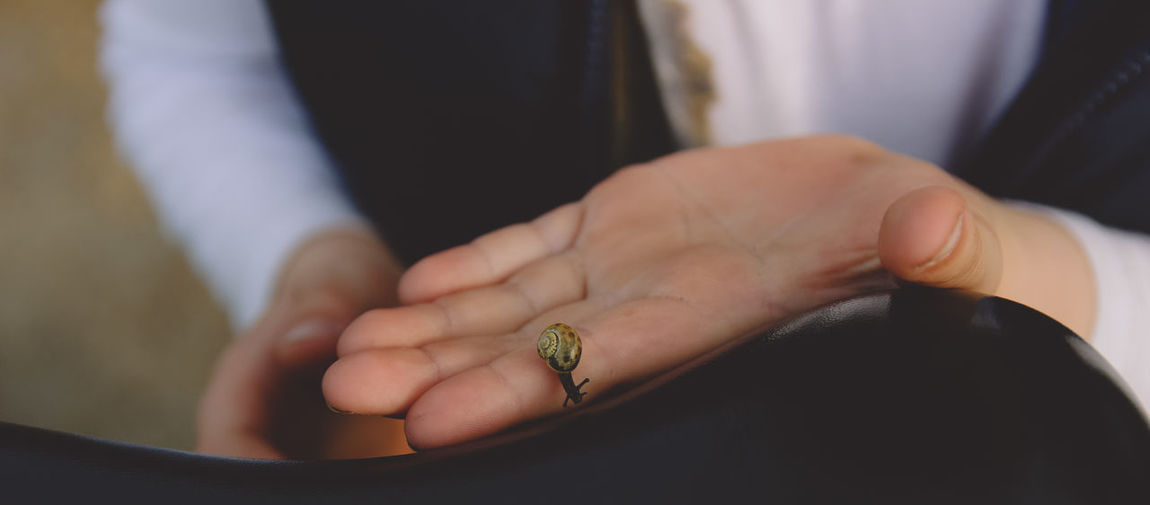 Cropped Image Of Man Holding Snail