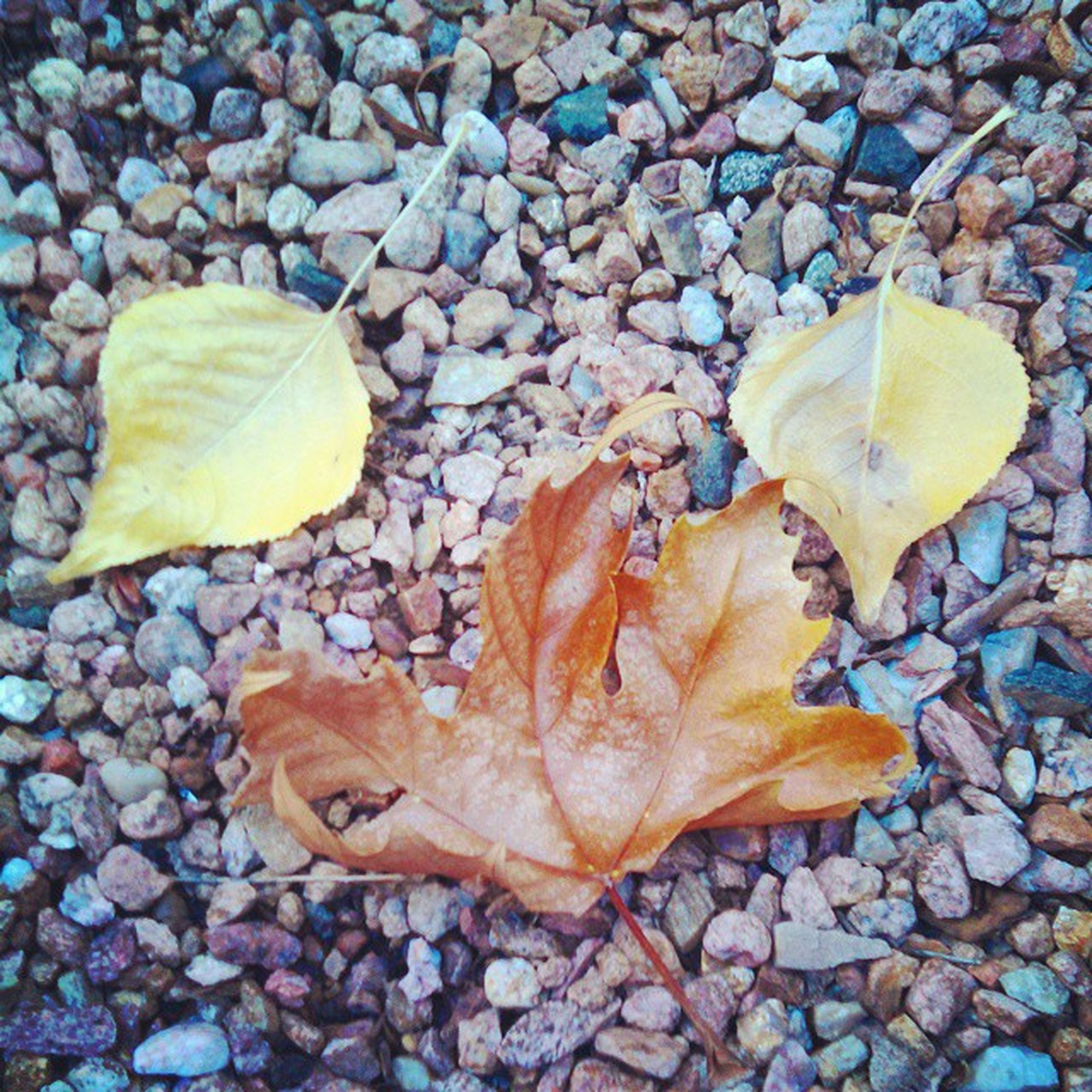 leaf, autumn, change, dry, leaves, season, leaf vein, fallen, nature, high angle view, natural pattern, abundance, close-up, day, wet, outdoors, fragility, beauty in nature, stone - object, backgrounds