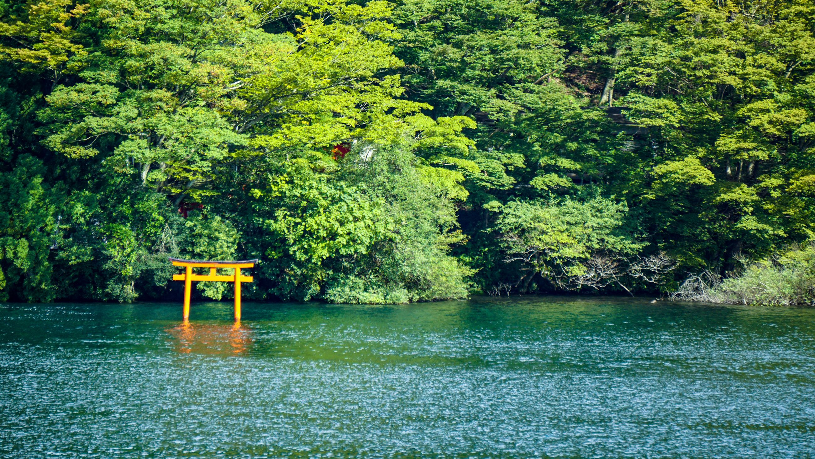 tree, plant, water, nature, lake, green color, beauty in nature, no people, forest, day, tranquility, tranquil scene, growth, scenics - nature, outdoors, yellow, idyllic, waterfront
