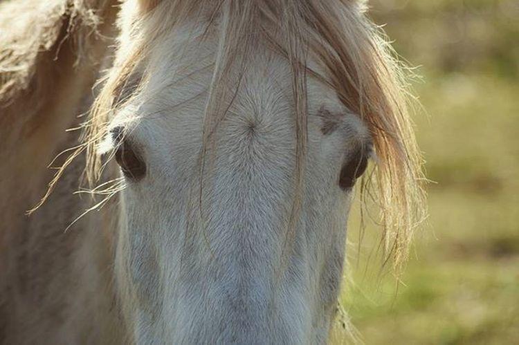 Lily 🌙 ♠♣Animalphotography Horses Pony Equestrian Horsephotography Equinephotography Nature Equestrianphotography Northcarolina Ncphotography Mypictures Equestrianlife Horselover Naturephotos ♣♠
